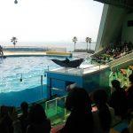 福岡で水族館といえばマリンワールド!